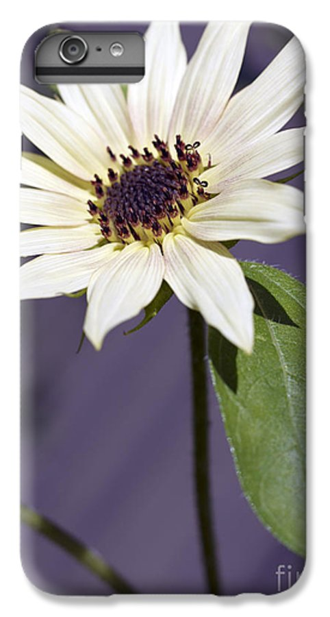 Helianthus Annus IPhone 6s Plus Case featuring the photograph Sunflower by Tony Cordoza