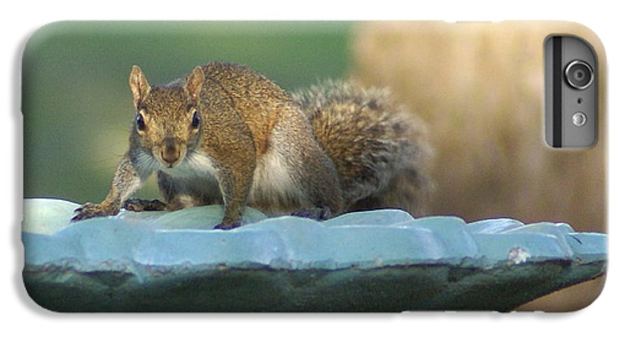 Squirrel IPhone 6s Plus Case featuring the painting Testing The Waters by Debbie May