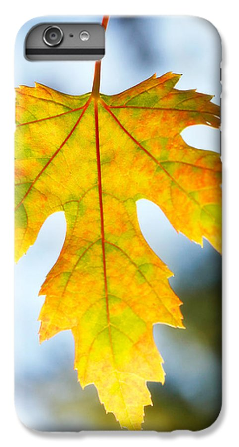 Maple IPhone 6s Plus Case featuring the photograph The Maple Leaf by Marilyn Hunt