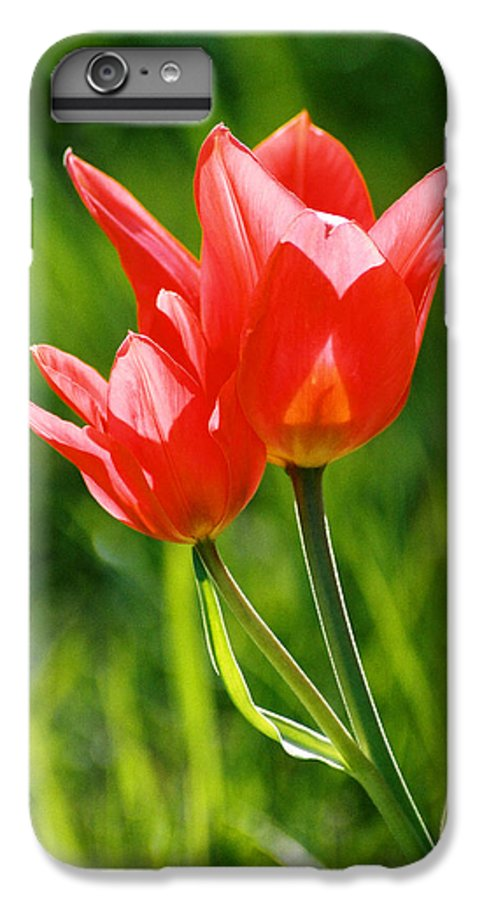 Flowers IPhone 6s Plus Case featuring the photograph Toronto Tulip by Steve Karol