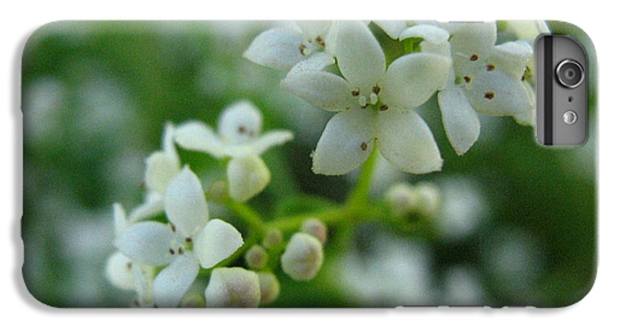 Flower IPhone 6s Plus Case featuring the photograph White Floral Cluster by Melissa Parks