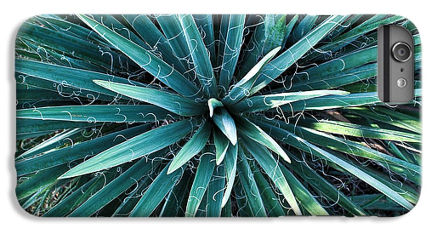 Yucca IPhone 6s Plus Case featuring the photograph Yucca Plant Detail by Douglas Barnett