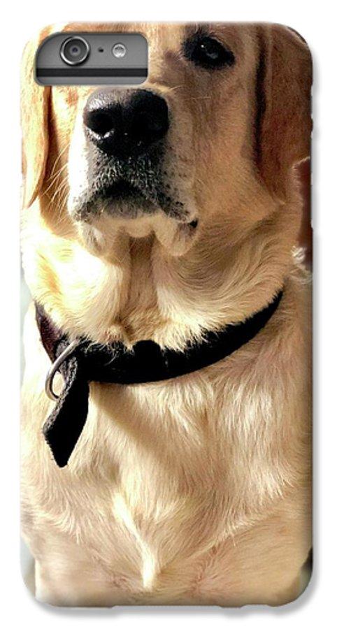 Labrador Dog IPhone 6s Plus Case featuring the photograph Labrador Dog by Arun Jain