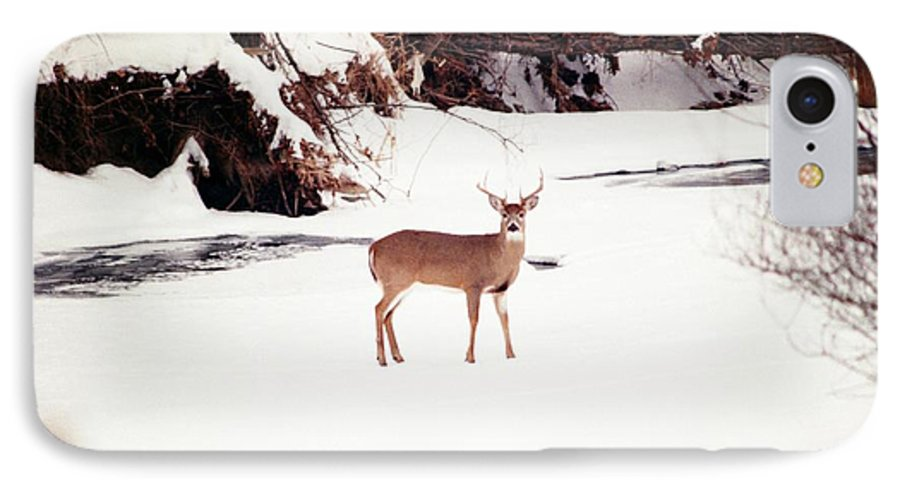 Whitetail Deer IPhone 7 Case featuring the photograph 080706-89 by Mike Davis