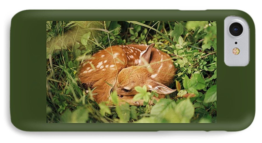 Deer IPhone 7 Case featuring the photograph 080806-17 by Mike Davis