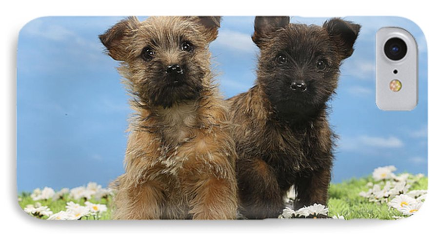 Cairn Terrier Puppy Dogs IPhone 7 Case