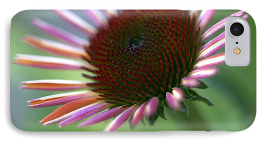 Genus Echinacea IPhone 7 Case featuring the photograph Coneflower by Tony Cordoza