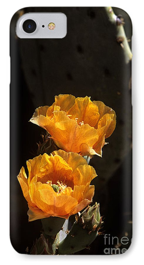 Cactus IPhone 7 Case featuring the photograph Apricot Blossoms by Kathy McClure