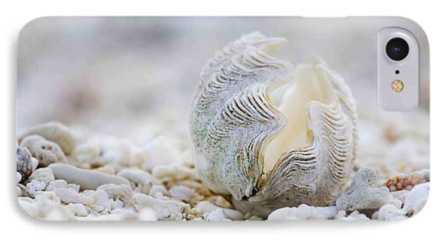 Clam Shell IPhone 7 Case featuring the photograph Beach Clam by Sean Davey