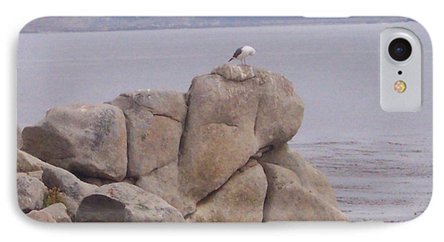 Bird IPhone 7 Case featuring the photograph Bird On A Rock by Pharris Art