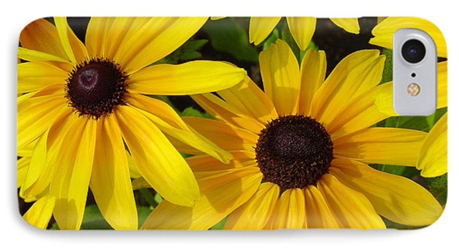 Black Eyed Susan IPhone 7 Case featuring the photograph Black Eyed Susans by Suzanne Gaff