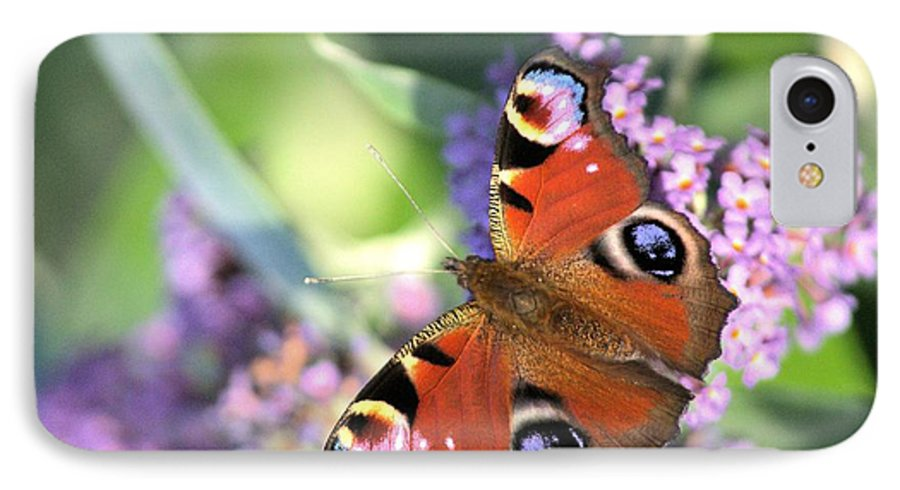 Butterfly IPhone 7 Case featuring the photograph Butterfly On Buddleia by Gordon Auld