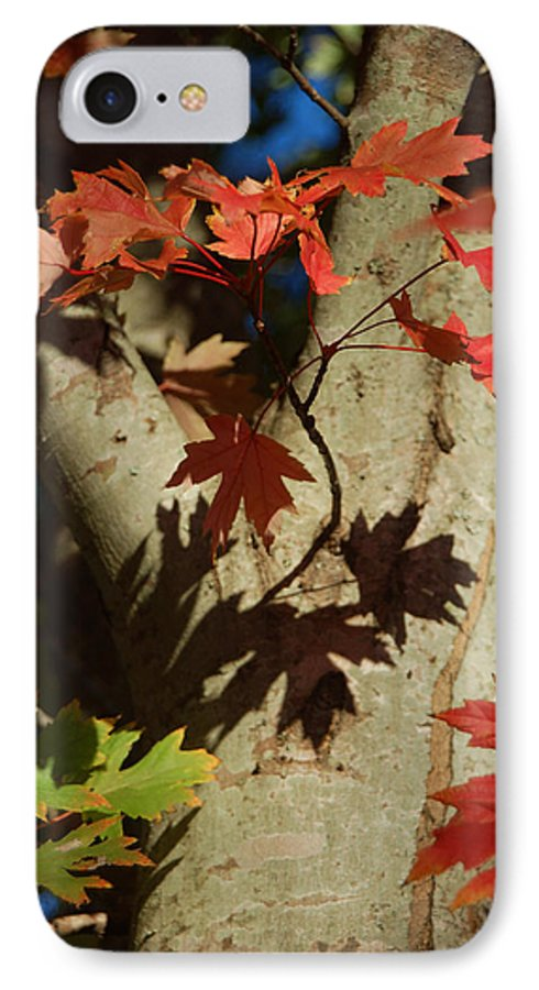 Autumn IPhone 7 Case featuring the photograph Carolina Autumn by Suzanne Gaff