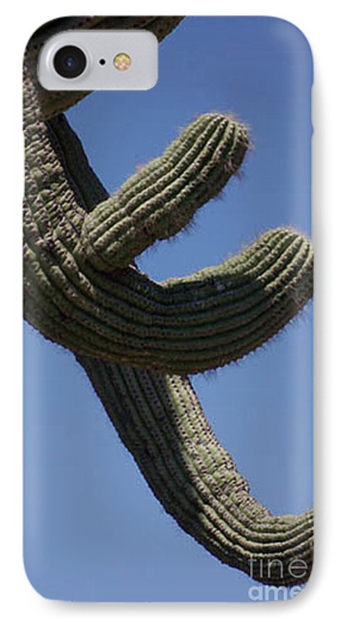 Saguaro IPhone 7 Case featuring the photograph Come Hither by Kathy McClure