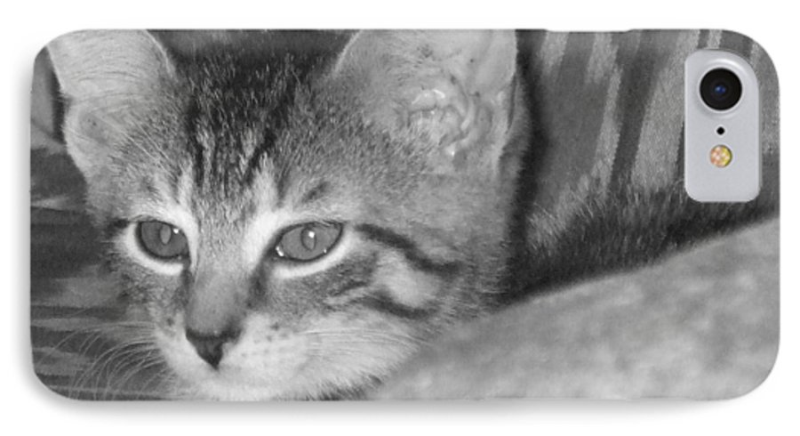 Kitten IPhone 7 Case featuring the photograph Comfy Kitten by Pharris Art
