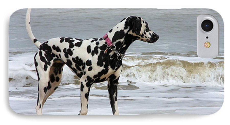 Dalmatian By The Sea IPhone 7 Case featuring the photograph Dalmatian By The Sea by Gordon Auld