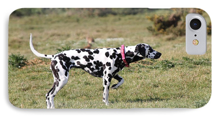 Dalmatian Pretending To Be A Pointer IPhone 7 Case featuring the photograph Dalmation Pretending To Be A Pointer by Gordon Auld