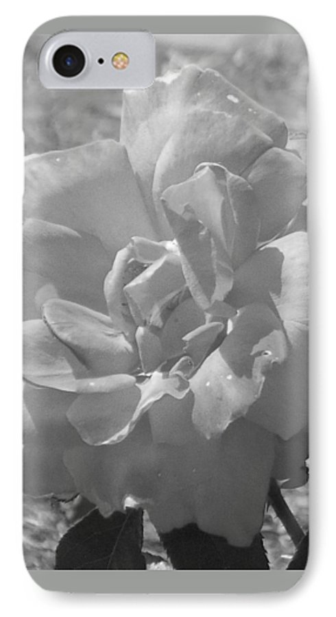 Rose IPhone 7 Case featuring the photograph Dew Rose by Pharris Art