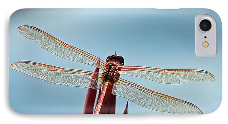 Dragonfly IPhone 7 Case featuring the photograph Dragonfly Days by Suzanne Gaff