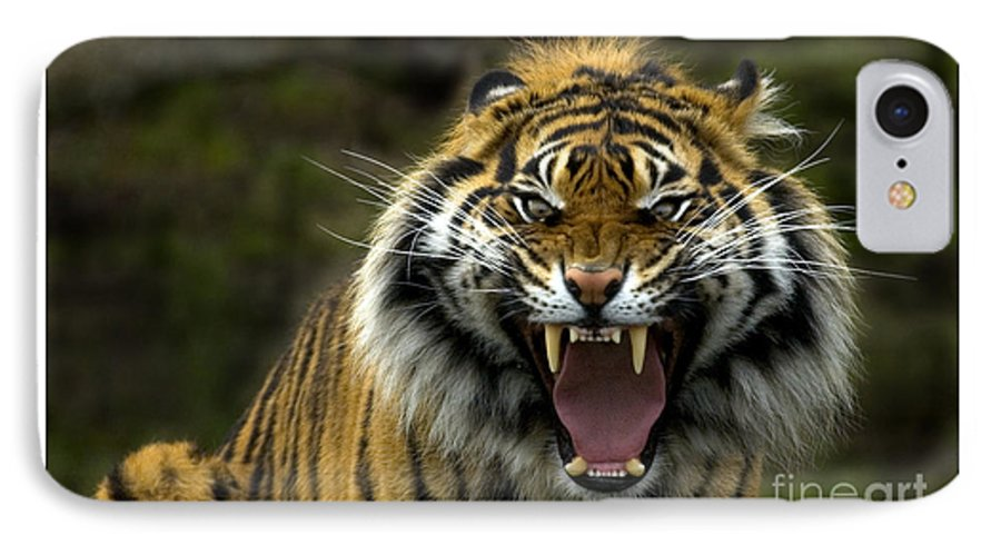 Tiger IPhone 7 Case featuring the photograph Eyes Of The Tiger by Mike Dawson