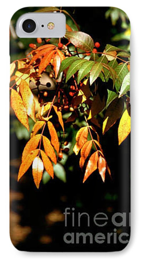 Fall Color IPhone 7 Case featuring the photograph Fall Leaves by Kathy McClure