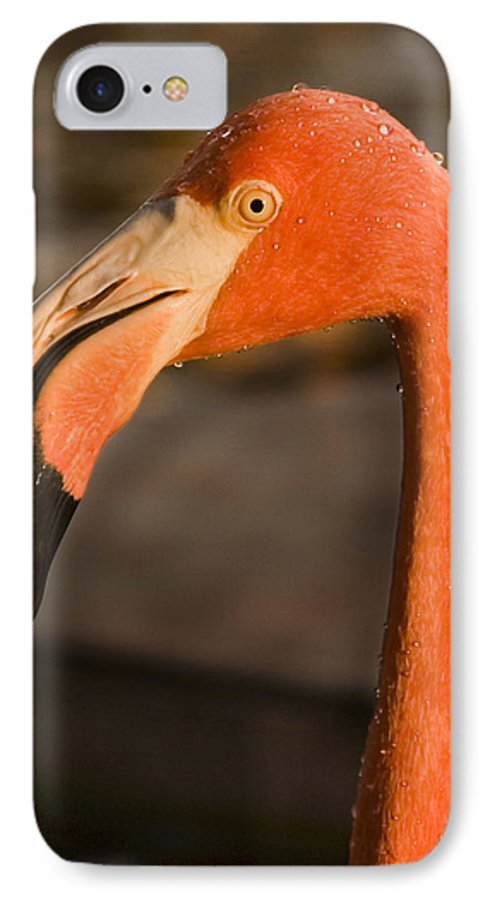 3scape IPhone 7 Case featuring the photograph Flamingo by Adam Romanowicz