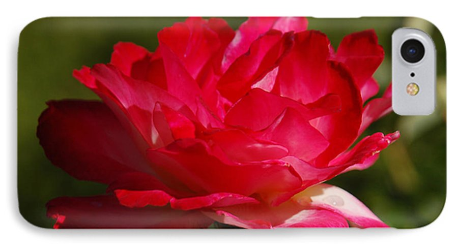Floral IPhone 7 Case featuring the photograph Fuchsia by Suzanne Gaff