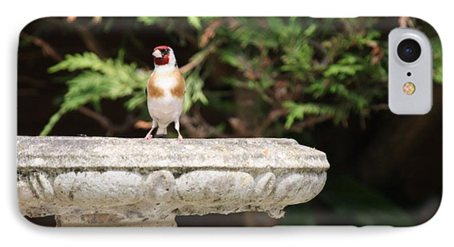 Goldfinch On Birdbath IPhone 7 Case featuring the photograph Goldfinch On Birdbath by Gordon Auld