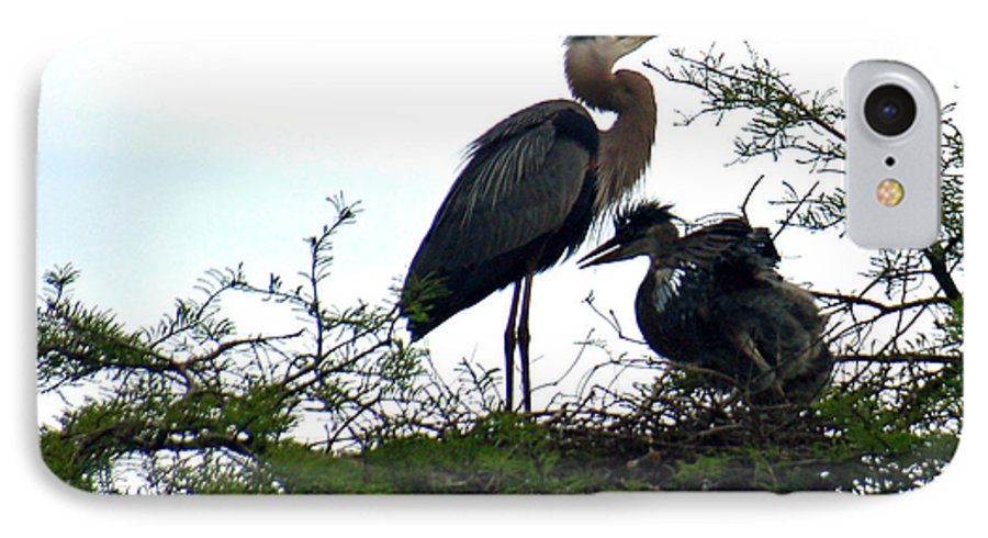 Blue Heron IPhone 7 Case featuring the photograph Great Blue Heron With Fledglings II by Suzanne Gaff