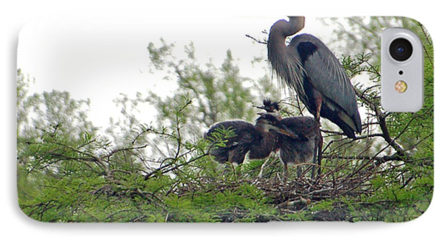 Great Blue Heron IPhone 7 Case featuring the photograph Great Blue Heron With Fledglings by Suzanne Gaff