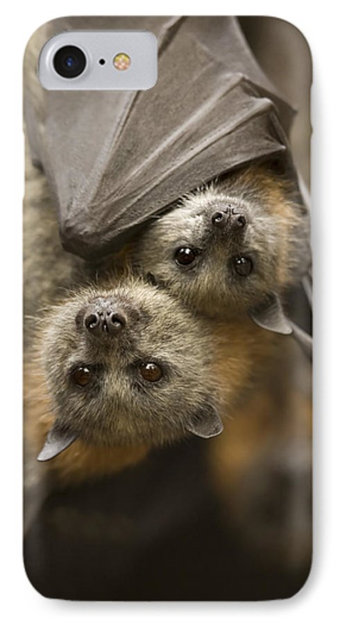 Bats IPhone 7 Case featuring the photograph Hang In There by Mike Dawson