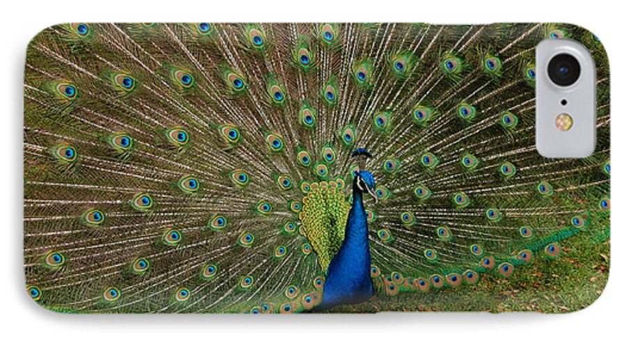 Peacock IPhone 7 Case featuring the photograph Its All About Him by Suzanne Gaff