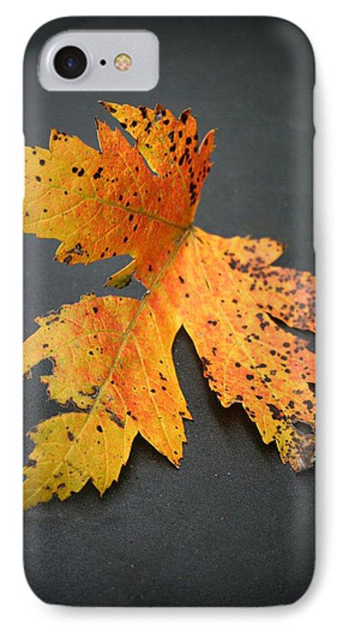Nature IPhone 7 Case featuring the photograph Leaf Portrait by Linda Sannuti