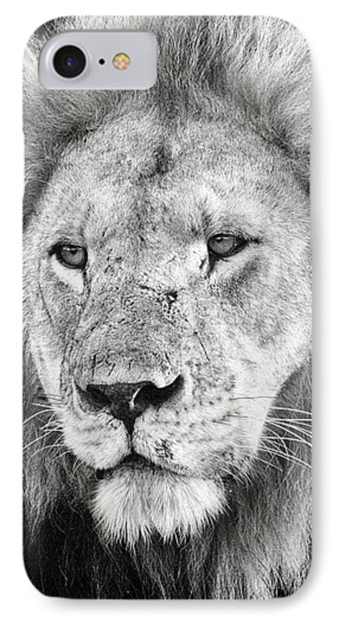 3scape IPhone 7 Case featuring the photograph Lion King by Adam Romanowicz