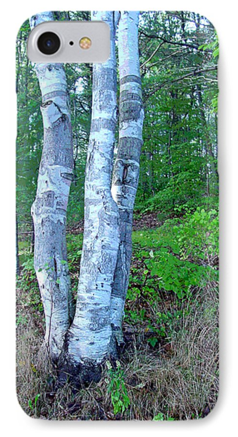 Birch Tree IPhone 7 Case featuring the photograph Lone Birch In The Maine Woods by Suzanne Gaff