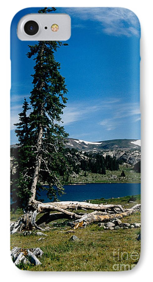 Mountains IPhone 7 Case featuring the photograph Lone Tree At Pass by Kathy McClure