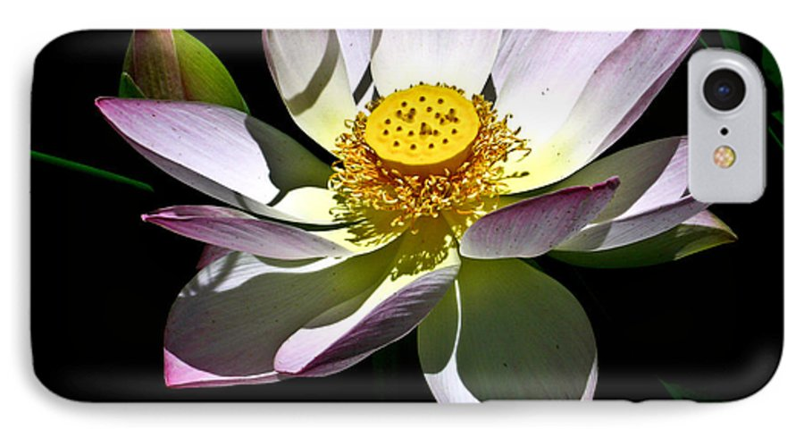 Lotus IPhone 7 Case featuring the photograph Lotus Of The Night by Douglas Barnett