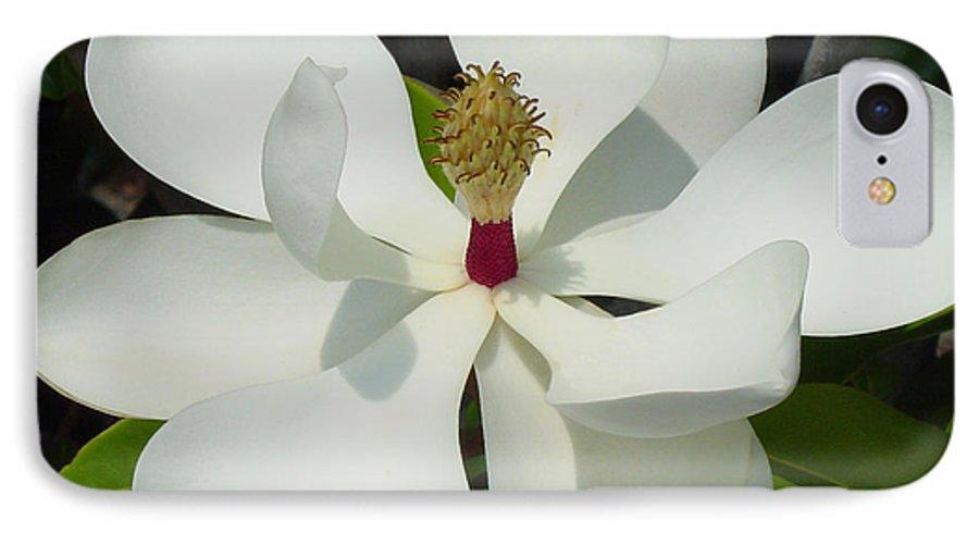 Magnolia Grandiflora IPhone 7 Case featuring the photograph Magnolia II by Suzanne Gaff