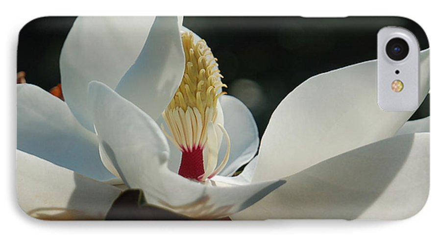 Magnolia IPhone 7 Case featuring the photograph Magnolia Tiny Gem by Suzanne Gaff