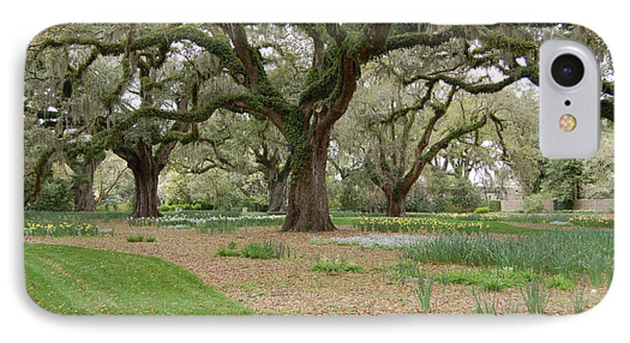Live Oak IPhone 7 Case featuring the photograph Majestic Live Oaks In Spring by Suzanne Gaff