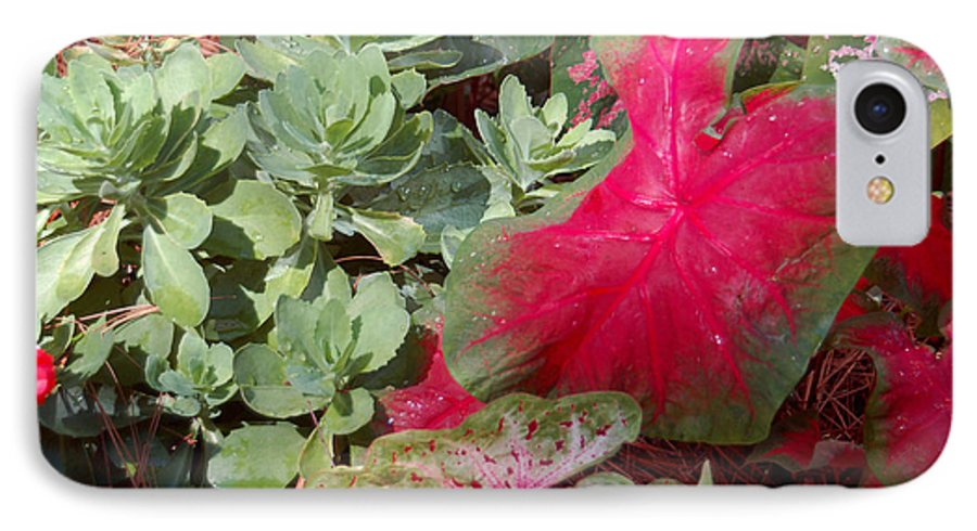 Caladium IPhone 7 Case featuring the photograph Morning Rain by Suzanne Gaff