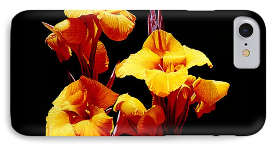 Yellow Cannas IPhone 7 Case featuring the painting Orange Cannas by Gary Hernandez