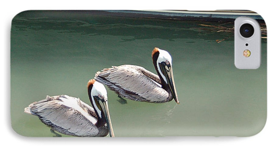 Brown Pelican IPhone 7 Case featuring the photograph Pelicans Partners by Suzanne Gaff