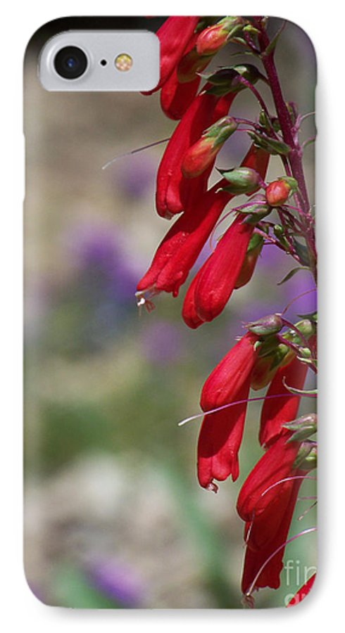 Flowers IPhone 7 Case featuring the photograph Penstemon by Kathy McClure