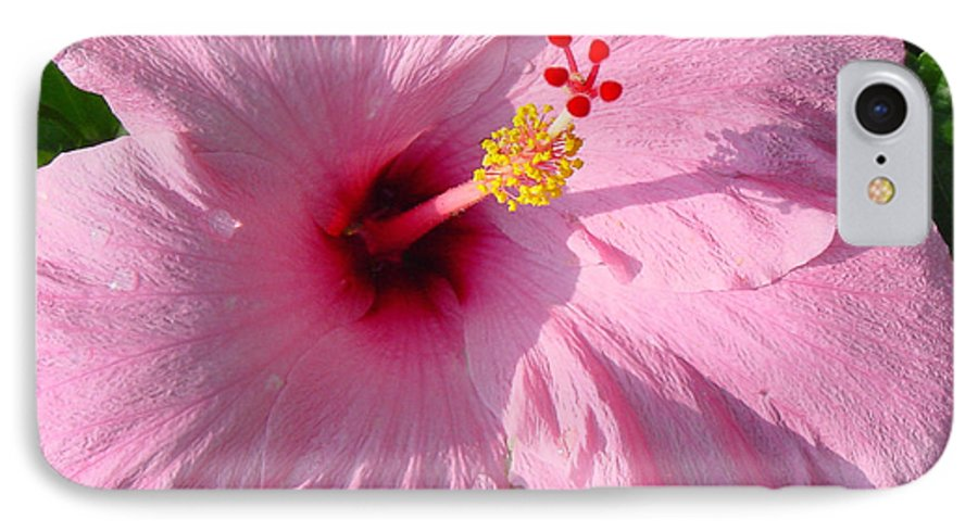 Pink Hibiscus IPhone 7 Case featuring the photograph Pink Hibiscus by Suzanne Gaff