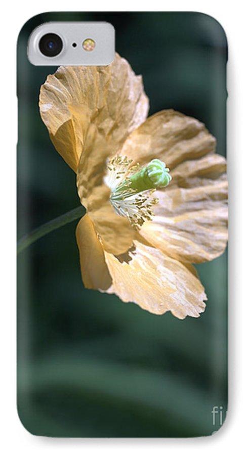 Poppy Orange IPhone 7 Case featuring the photograph Poppy by Tony Cordoza