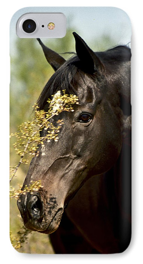 Horse IPhone 7 Case featuring the photograph Portrait Of A Thoroughbred by Kathy McClure