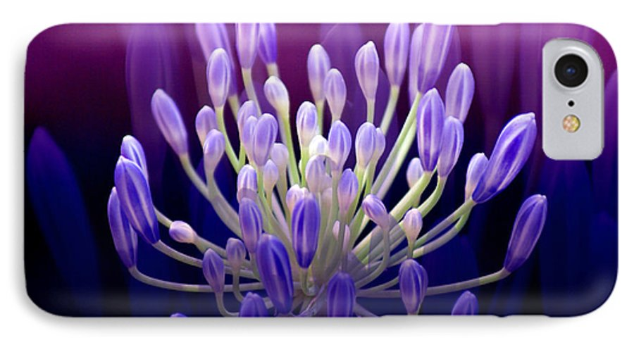 Agapanthus IPhone 7 Case featuring the photograph Praise by Holly Kempe