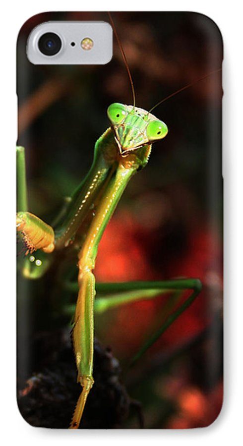 Praying Mantis IPhone 7 Case featuring the photograph Praying Mantis Portrait by Linda Sannuti