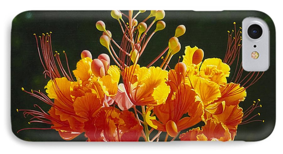 Floral IPhone 7 Case featuring the painting Pride Of Barbados by Gary Hernandez